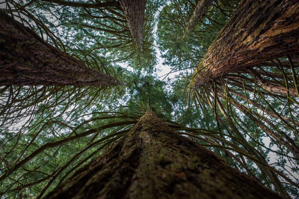 Bäume_ Elvan Biondic