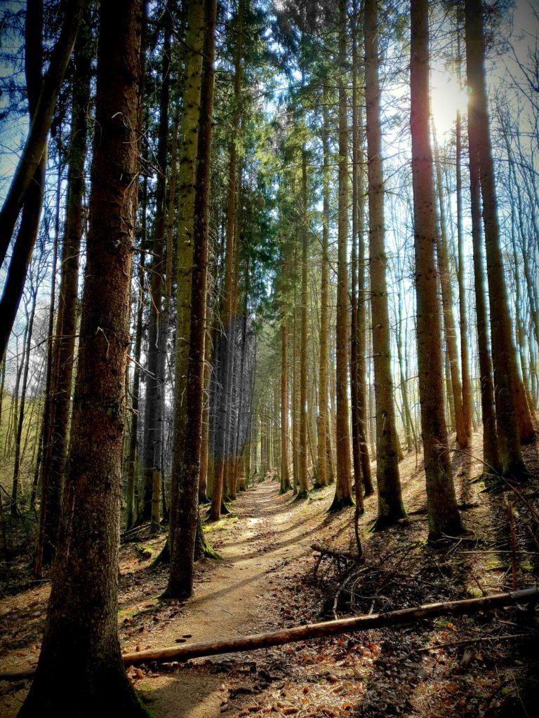 Bäume_ Eva Busch
